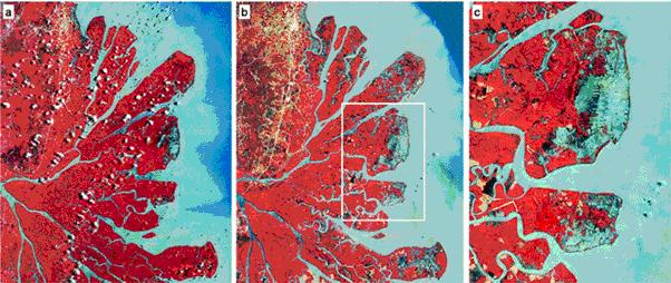 perubahan-penggunaan-lahan-hutan-mangrove-delta-mahakam1